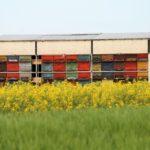 valódi méhpempőt forgalmazó boltok és méhészetek